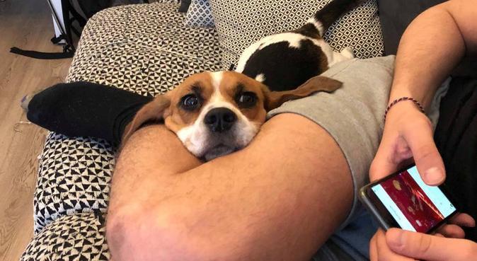 Au bonheur des chiens, dog sitter à Nice
