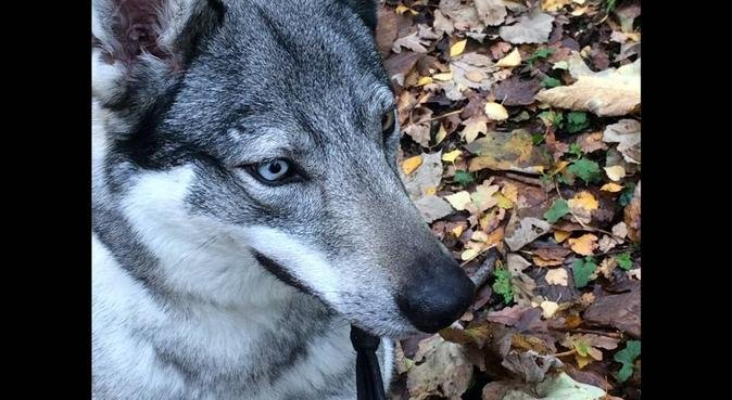 ALL SEASONS DOG WALKER in High Wycombe, dog sitter in High Wycombe