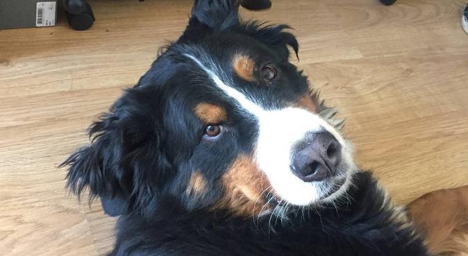 Un moment agréable !, dog sitter à Avon
