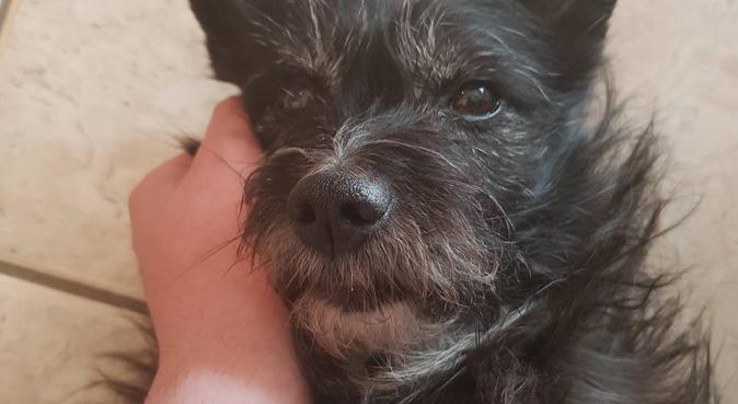 A spasso con un futuro veterinario, dog sitter a Napoli, NA, Italia