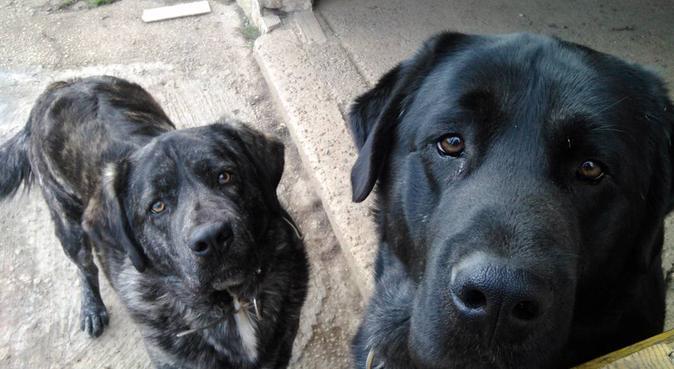 Cuidadora de perros, canguro en Oviedo
