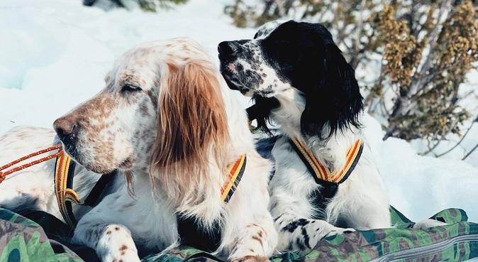 Hundelsker som dessverre ikke har sin egen♥️, hundepassere i Oslo