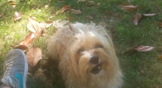 Dogs:part of my family, dog sitter in Stratford