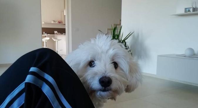 STUDENTESSA AMANTE DEI CANI, dog sitter a Parma, PR, Italia