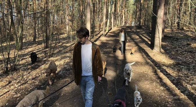 Dierenlievend koppel zoekt wandelhond in Woerden, hondenoppas in Woerden, Nederland