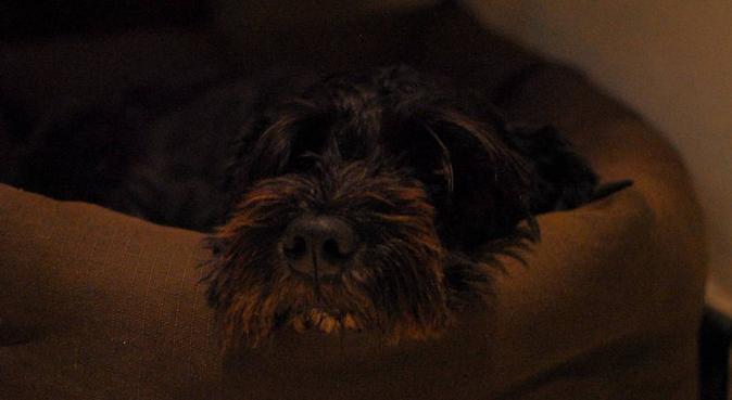 Amor, diversión y cuidado para su amor perruno, dog sitter à Nantes, Francia