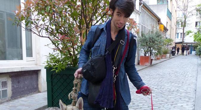 Je promène vos chiens sur Marly le Roi et environs, dog sitter à Marly-le-roi