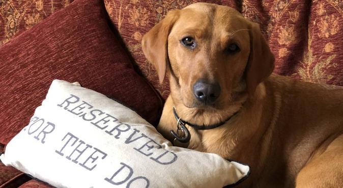 Dog Sitter, Boarder & Friend, dog sitter in Bradford-on-Avon