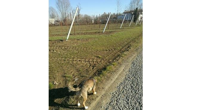 IA spasso con Ljubica :), dog sitter a Bologna