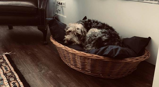 Liefdevol oppasadres in Leiderdorp, hondenoppas in LEIDERDORP