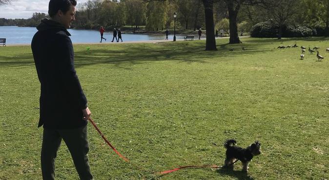 Kärleksfull och flexibel hudpassning på Östermalm, hundvakt nära Stockholm, Sverige