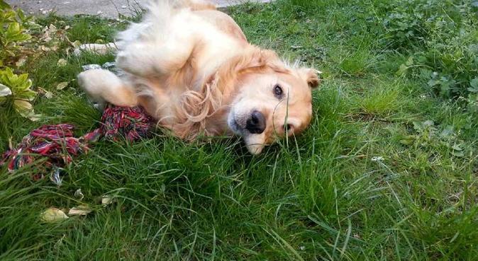 La passionnée de boules de poils, dog sitter à Drancy