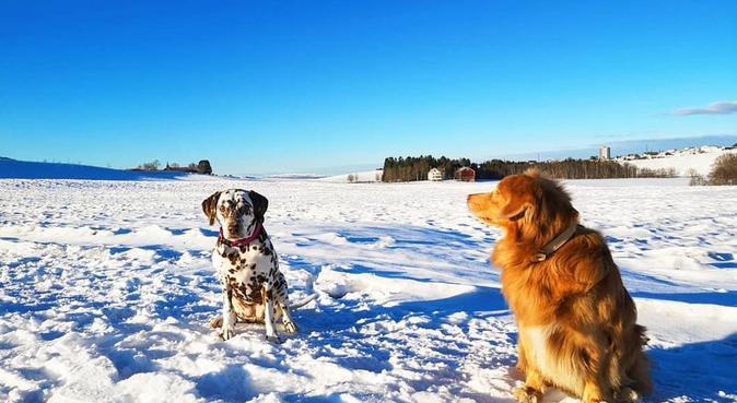 Student med hund som hobby!, hundepassere i Trondheim