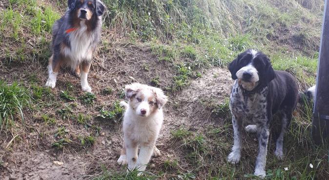 Le paradis des toutous niçois, dog sitter à Nice