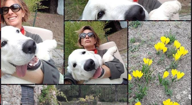 HAPPY DOGS!, dog sitter a romito magra