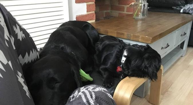 A Home-From-Home, dog sitter in Worcester
