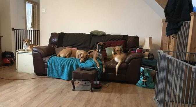 Doggy Paradise on their pawstep!, dog sitter in London