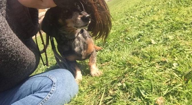 Chiswick Dog Buddy, dog sitter in chiswick