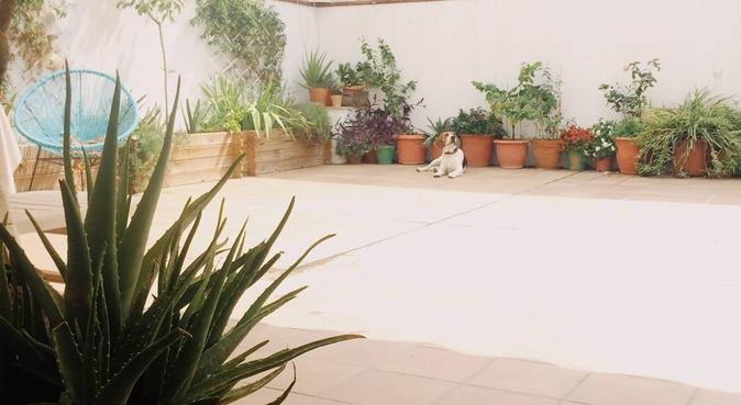 Amor, bienestar y paseos maravillosos, canguro en Sant Pere de Ribes