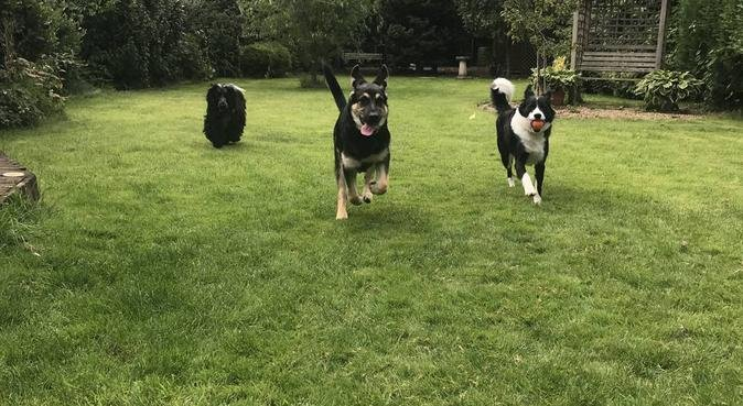 Walks in Bournemouth with experienced dog lover, dog sitter in Bournemouth, UK