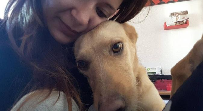 ❤️Tu peludo será uno más en la familia ❤, canguro en Valencia