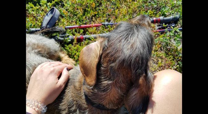 Firbente er de beste turkameratene, hundepassere i Bergen