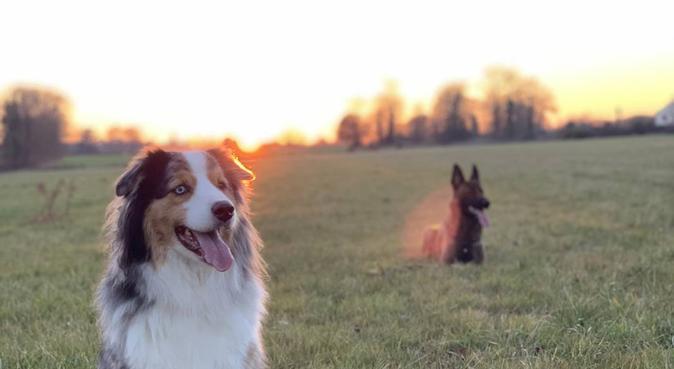 DOG SITTER AU POIL, dog sitter à Rennes, France