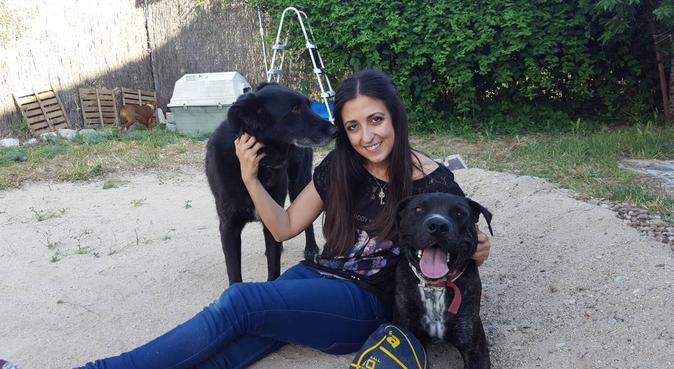 Las Vacaciones perfectas para tu perro, canguro en Valdemorillo