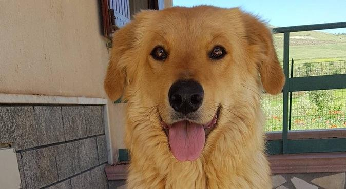 Divertimento e passeggiate per i nostri amici a 4, dog sitter a Palermo, PA, Italia
