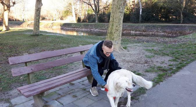 Voorburg, hondenoppas in VOORBURG