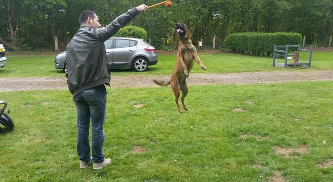 La maison des calins, detente et jeux des toutous, dog sitter à Rouen