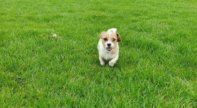 Fern's Animal Care-Treating your dog like my own, dog sitter in Preston