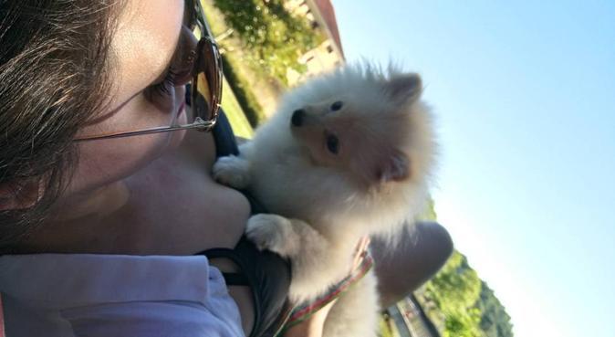 Happy walks in Westbourne, dog sitter in Bournemouth