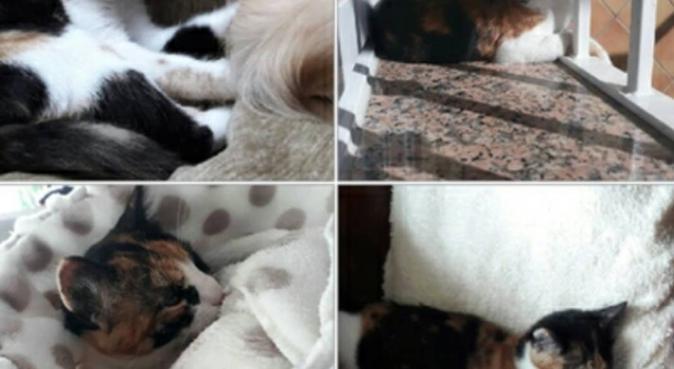 Amante de perros y gatos, canguro en Granada