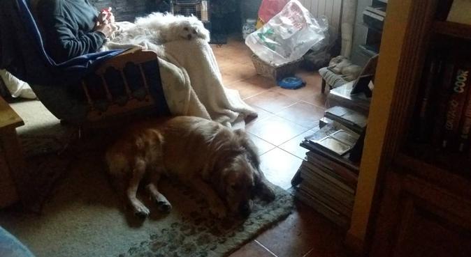 Cuidamos de tu perro, con atención perronalizada, canguro en Moralzarzal