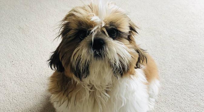 Fun Energetic Dog Lovers in Northampton, dog sitter in Northampton