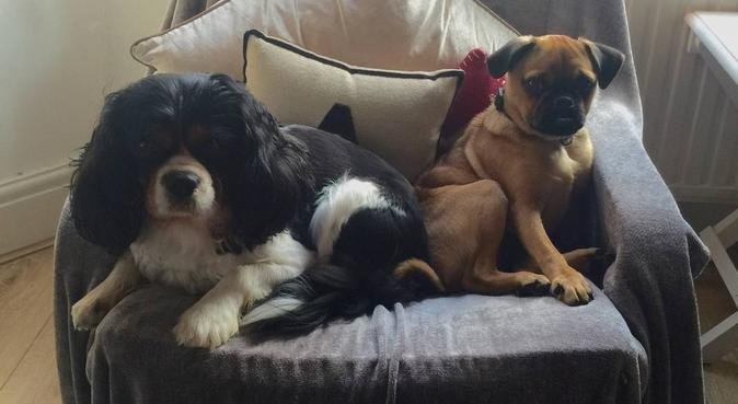 Loving dog owner keen to help other fur-babies 😍, dog sitter in Liverpool