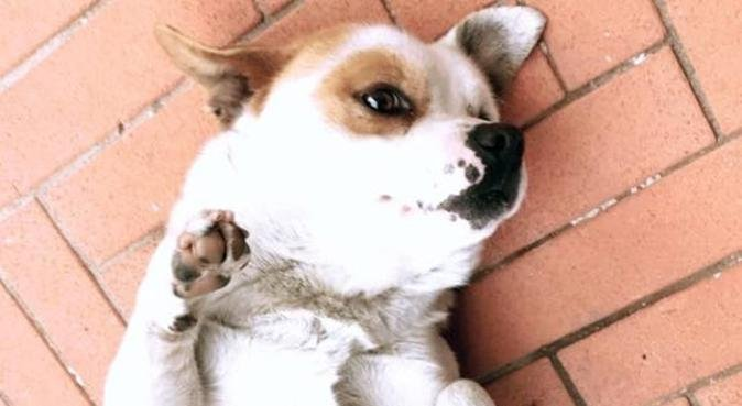 Passeggiate coccole e attenzioni per i vostri cani, dog sitter a Venezia, VE, Italia