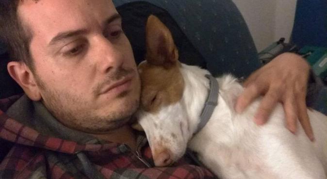 Paseador de perros económico, canguro en Madrid