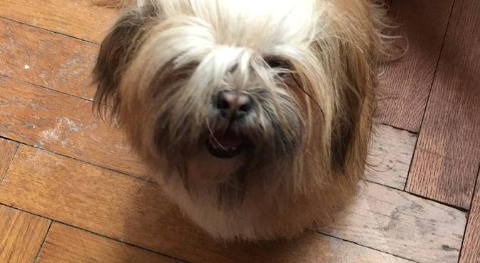 Le cocooning canin à Toulouse !!, dog sitter à Toulouse