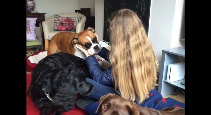 Ealing Park Life, dog sitter in London