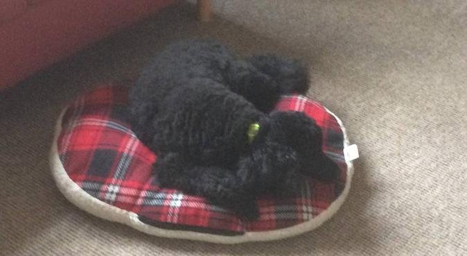 Friendly household looking to love your dogs., dog sitter in Walton