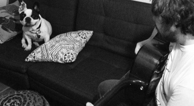 Joshua's Dog Care, dog sitter in Cardiff