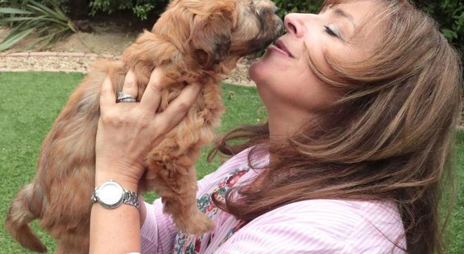 Experienced Dog Walker, dog sitter in Edgware