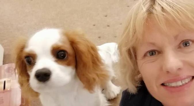 Doggies Dream Days, dog sitter in Gloucester