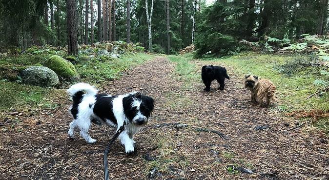 Lunchpromenader med Mimmi, Tilde & Ralf, hundvakt nära Nyköping