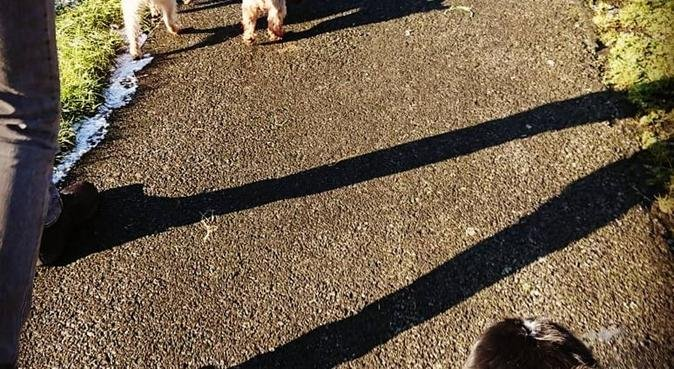 Lead The Way (new pet care business in Belfast), dog sitter in Belfast