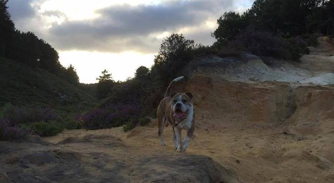 Fun, Experienced & Passionate about Animals!, dog sitter in Bournemouth