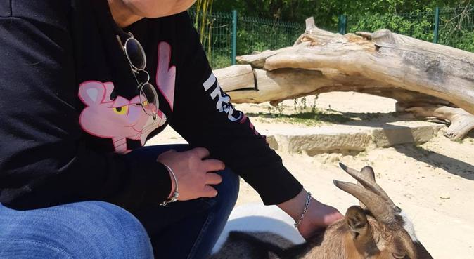 Accompagnatrice de balade pour vos boules de poils, dog sitter à Angers