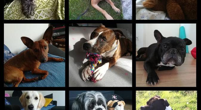 La Case Toutou - Audrey Dogsitter, dog sitter à Loos